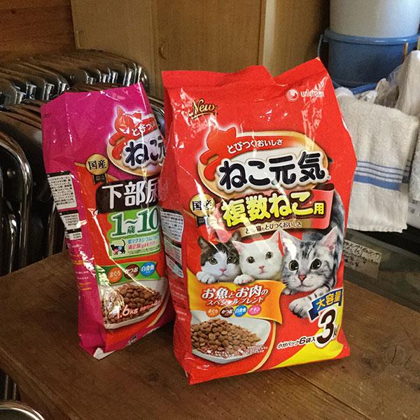 猫の譲渡会(2017年9月23日)