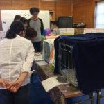 猫の譲渡会(2018年4月21日)