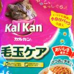 猫の譲渡会(2018年5月19日)