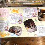 猫の譲渡会(2018年6月16日)