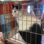 猫の譲渡会(2019年3月16日)