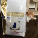 猫の譲渡会(2019年4月20日)