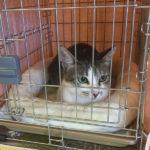 猫の譲渡会(2019年7月20日)