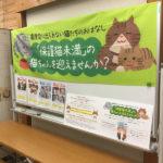 猫の譲渡会(2019年10月19日)