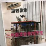 猫の譲渡会(2020年2月15日)