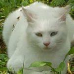 迷子の白ちゃん