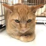 猫の譲渡会(2020年9月19日)