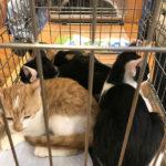 猫の譲渡会(2020年10月24日)