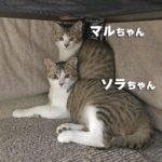 マルちゃん&ソラちゃん